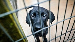 Plans to crack down on puppy smuggling and safeguard dog welfare outlined