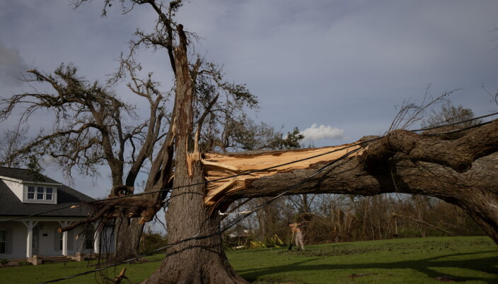 Local resident Kurt Charpentier rakes leaves past a fallen tree in his yard in the aftermath of Hurricane Ida in Bourg, Louisiana.
