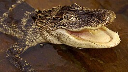 Exotic pet laws need radical overhaul, say campaigners