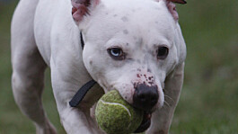 Scotland passes law to speed up rehoming of abused pets